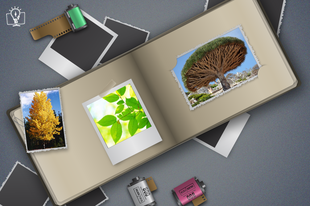 How to Help Your Customers to Create an Exclusive Photo Album